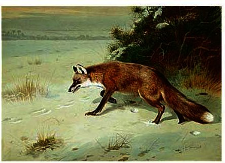 famous painting Al Acecho of Archibald Thorburn