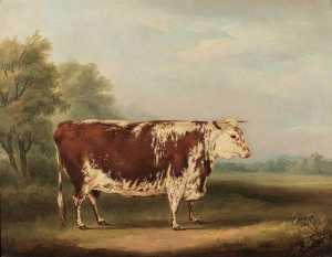 William Henry Davis - Hereford Vaca